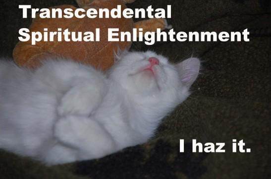 lolcat transcendental