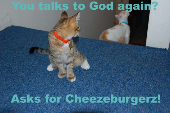 Lolcat ask for cheezeburger