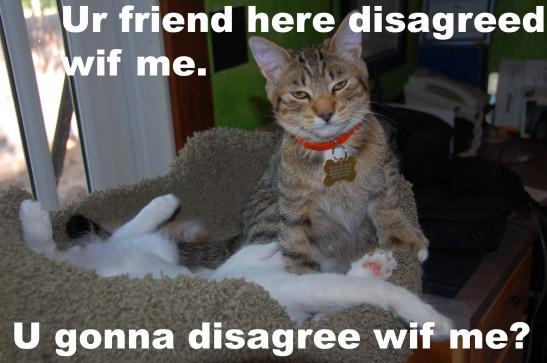 lolcat disagree wif me