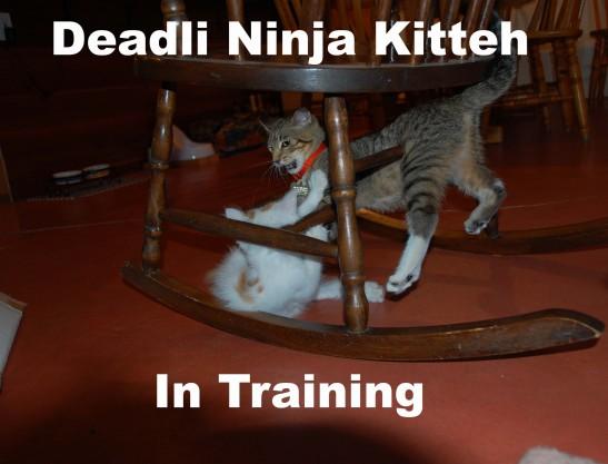 Deadli ninja kitteh
