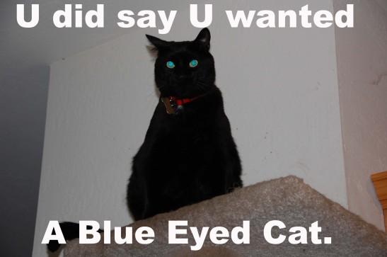 lolcat blue eyed cat